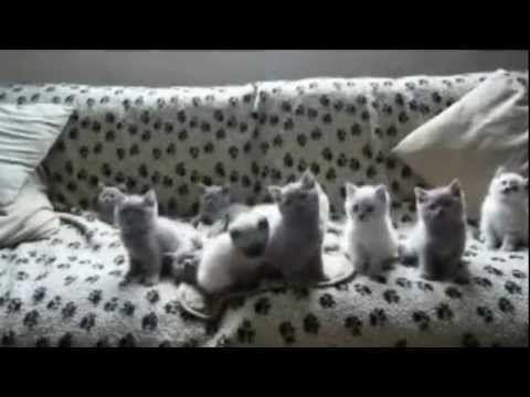 Best funny animals videos (MEvideos's Version) - videos.artpimp.bi...