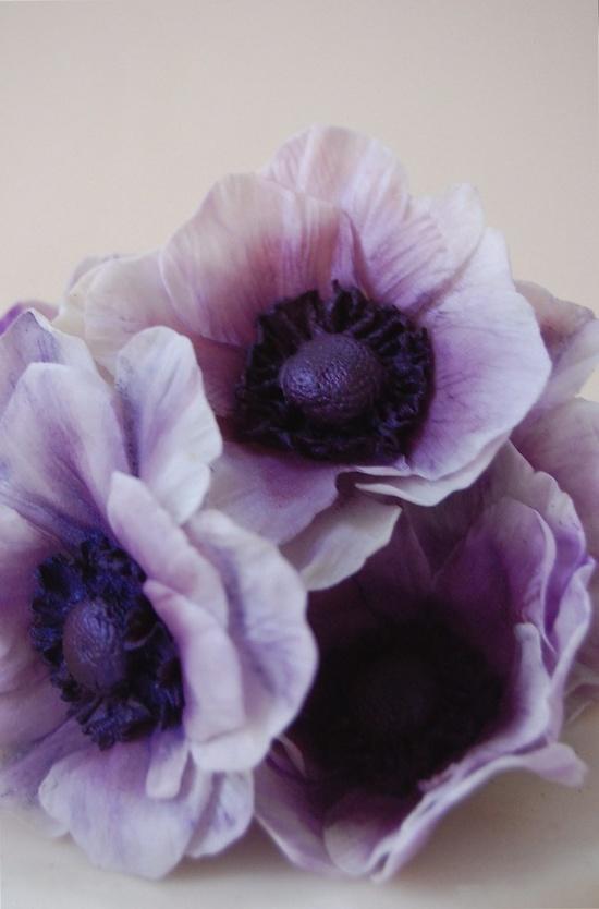 Lavender anemones