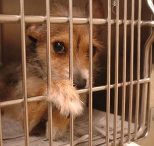 Love wanted.....Shelter animals.  Please FOSTER or ADOPT A PET from your local shelter.