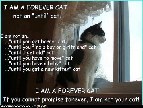 A Cat is Forever