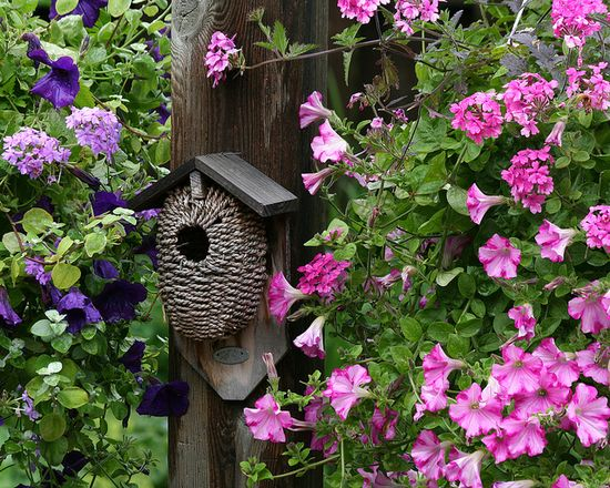 Birdhouse among flowers.