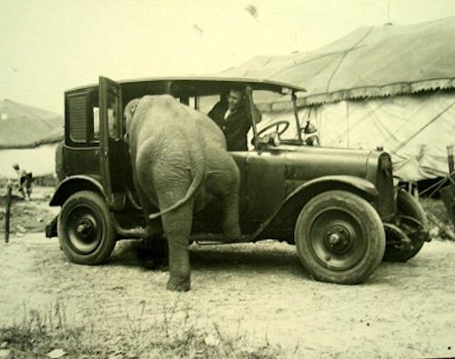 ELEPHANTS LOVES CARS