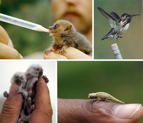 Tiny teeny creatures!