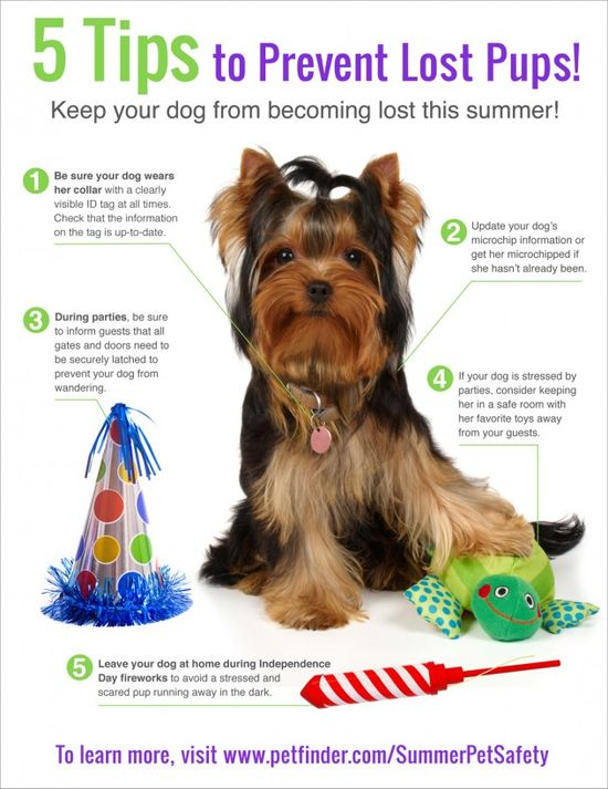 Infographic: Preventing Lost Dogs - Petfinder