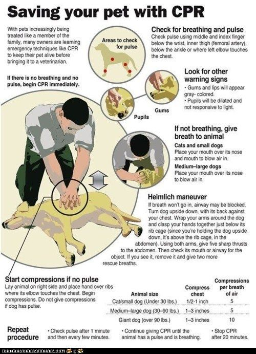 CPR for your dog.