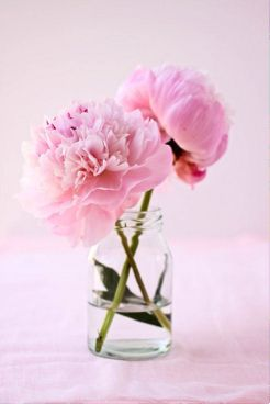 V-day peonies