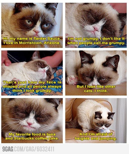 I ? Grumpy Cat! I will never look at him the same again!!!