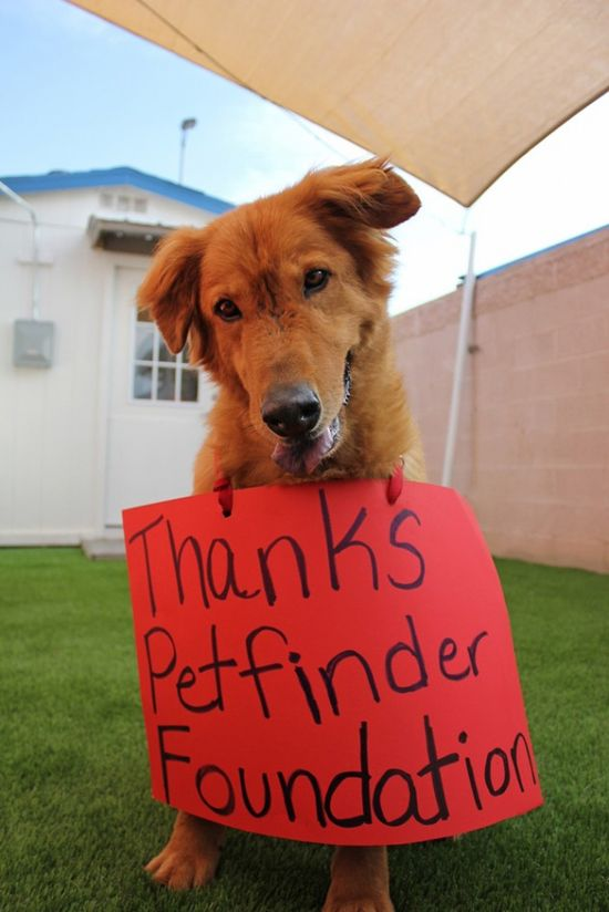 Click through to learn why this pup is saying thank you to the Petfinder Foundation for their Summer Cooling Grants!