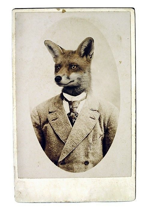 a fox in a suit