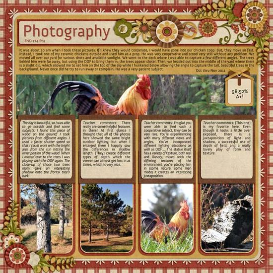 Pet / Animal layouts