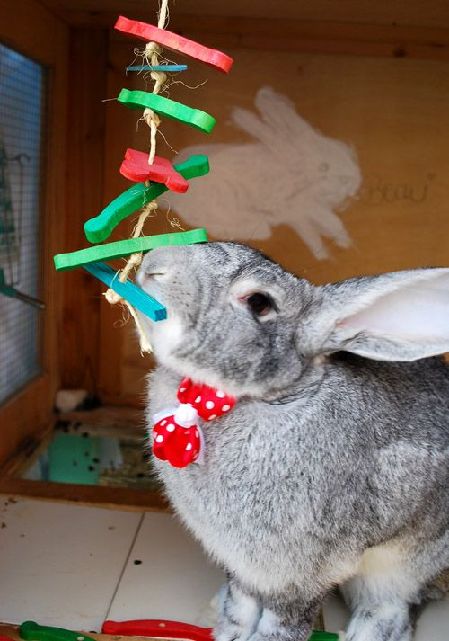 Cute Pet Rabbit Playing