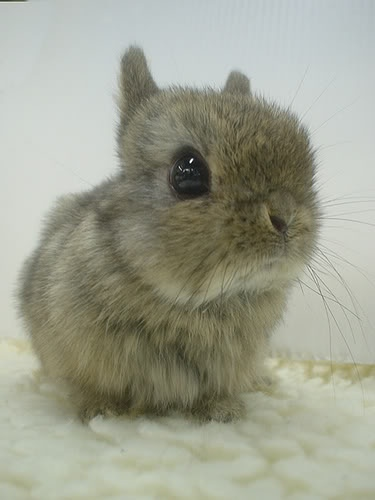 I will never tire of cute baby animals!  (especially bunnies)