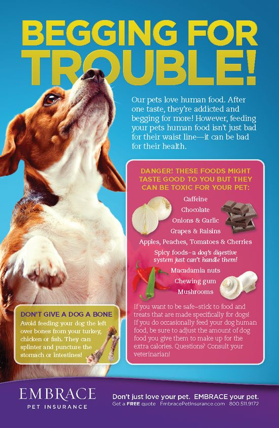 Some foods aren't just bad for your pet's waistline- they could make him sick.  For more pet tips and articles, click here- www.embracepetins...