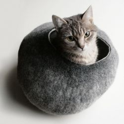 My cat would LOVE this