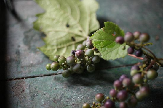 Berries from Saipua via Nicole Franzen