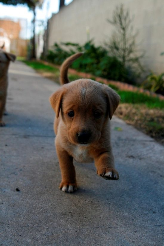 puppy out for a stroll