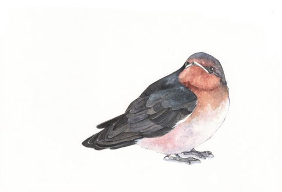 Swallow Painting  print of bird watercolor painting