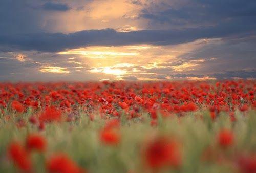 Amazing Beautiful Flowers Field