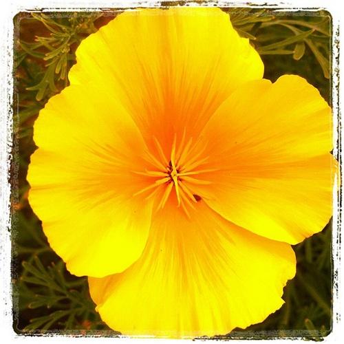 Nice blossomed yellow flower #intercer #flowers