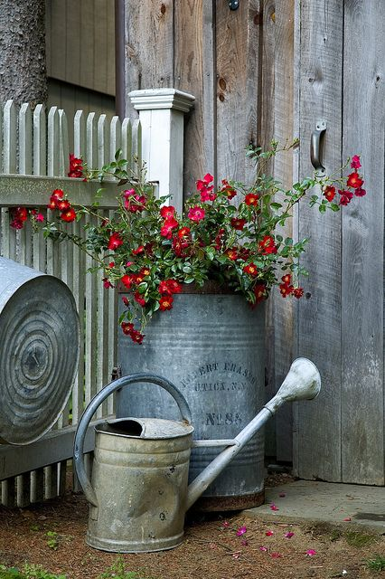 old tins and red flowers