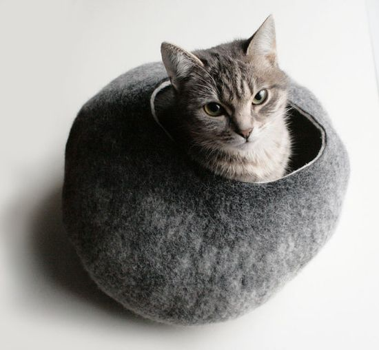 kitty in a felted pod
