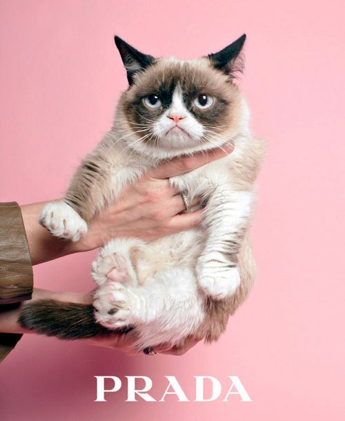 Grumpy Cat reluctantly for Prada.