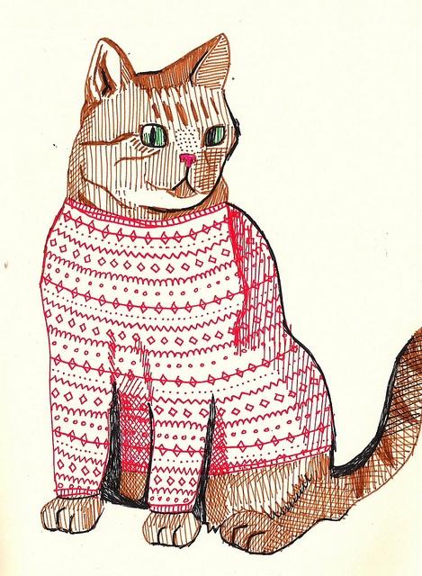 cat + sweater