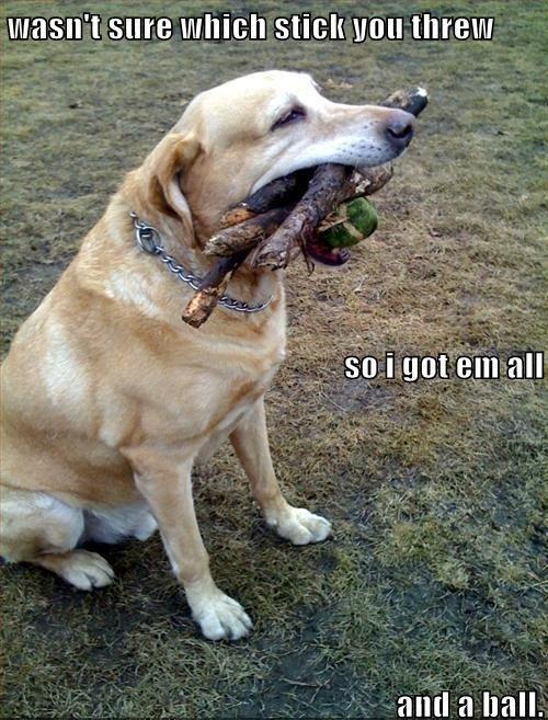 wasn't sure which stick you threw...Loki