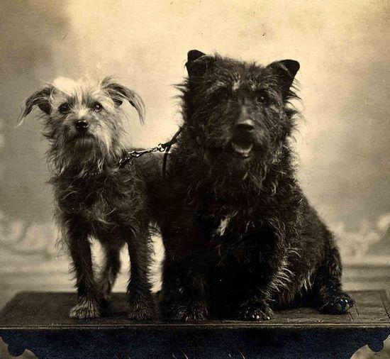 vintage terriers