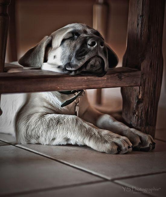 Terribly Tired -Sleep**.