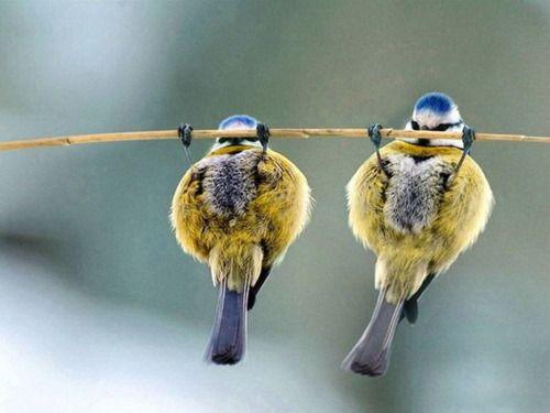 bird pull ups?