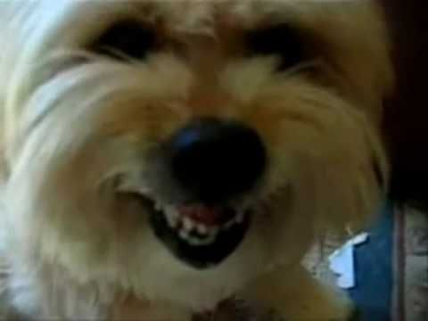 Most Hillariously Funny Dog Video Clips - videos.airgin.org...