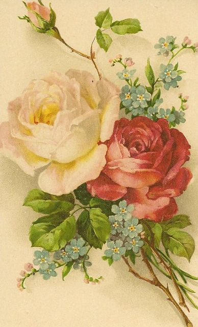 Roses & forget-me-nots