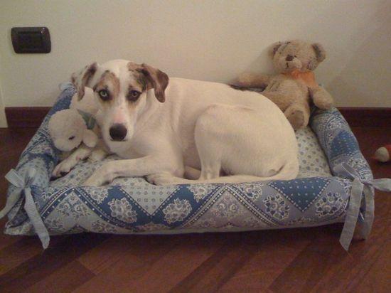 Dog bed, nice