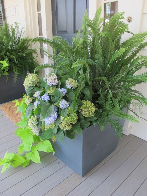 fern and hydrangea pretty summer planters
