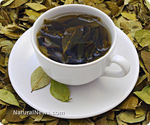 Green tea catechins block the formation of plaques to help prevent Alzheimers disease