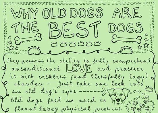 old dogs love you the best...