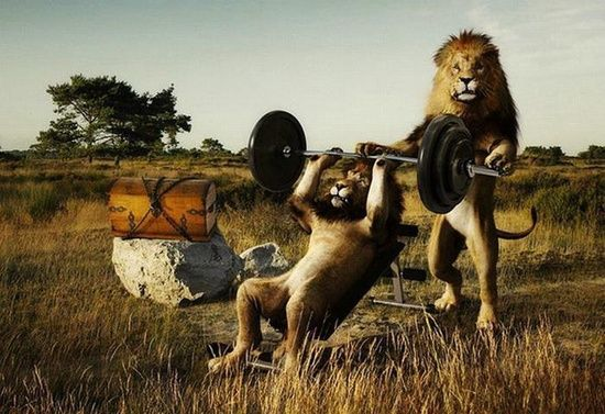 Who says bench presses aren't #physical exertion #Workout Exercises #Workout #exercising #physical exercise