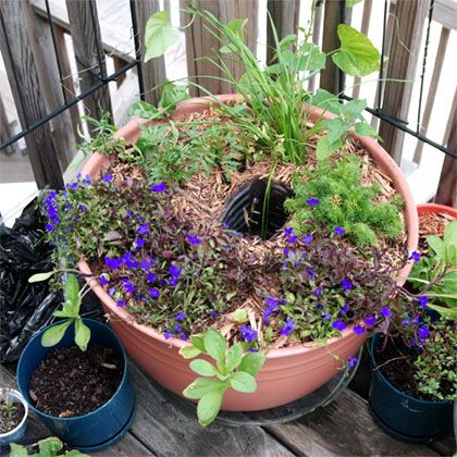 Use an inverted plastic bottle to irrigate your planters this summer! Keep your container garden happy through long hot days with a hidden water reservoir.