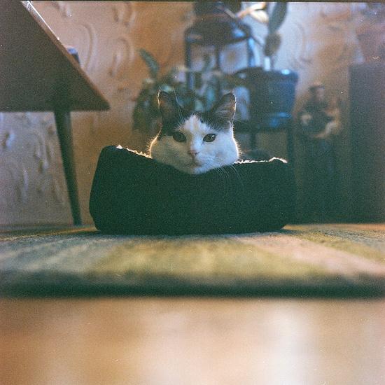 {cozy kitty head!} so cute :)