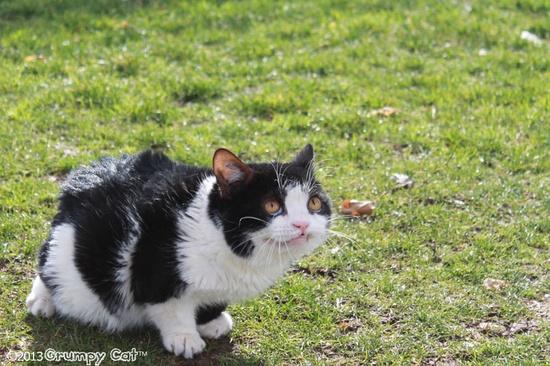Is Pokey...smiling?-Grumpy Cat