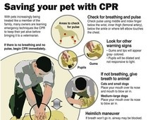 CPR for your pet