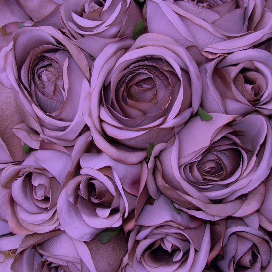 10 Images Inspired by Pantone's 2014 Color of the Year: Radiant Orchid - Bunch of Roses