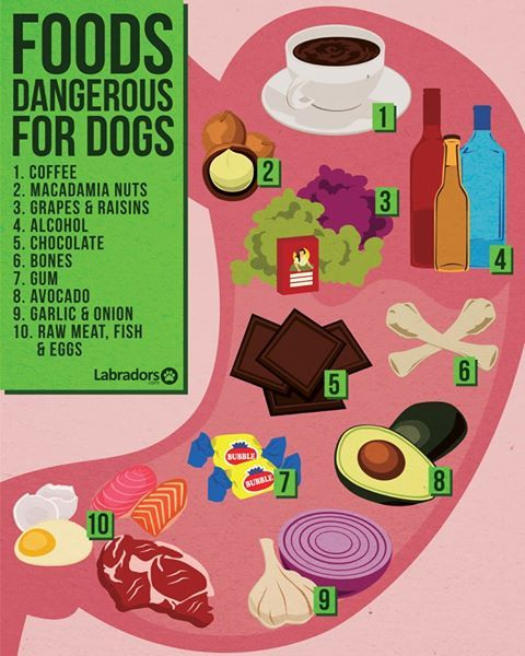 Foods dangerous for dogs