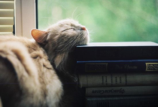 Cat sleeping on books.