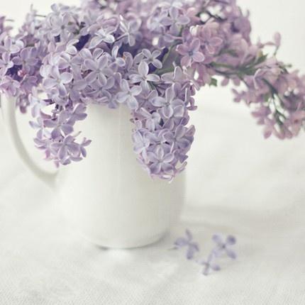 flowers via Karen: lavendar flowers