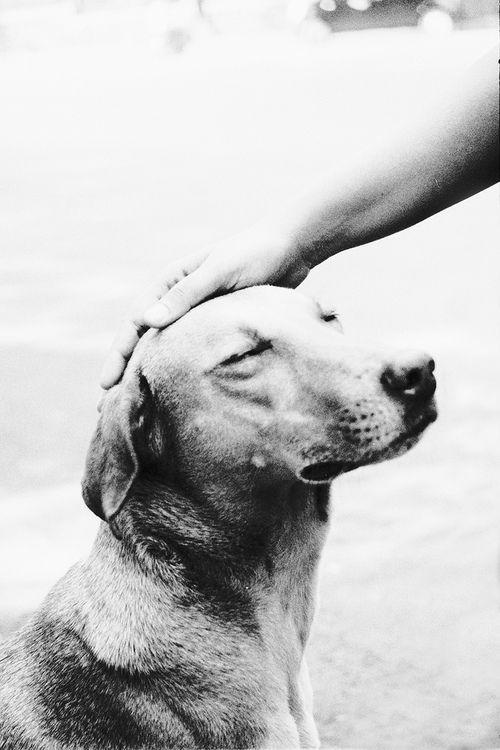 Good dog.