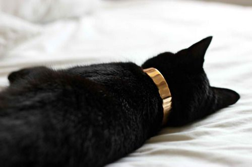 Sleeping black cat... what kind of collar is that? #sleeping #cat
