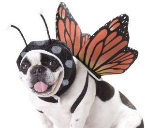 Butterfly Dog Costume.