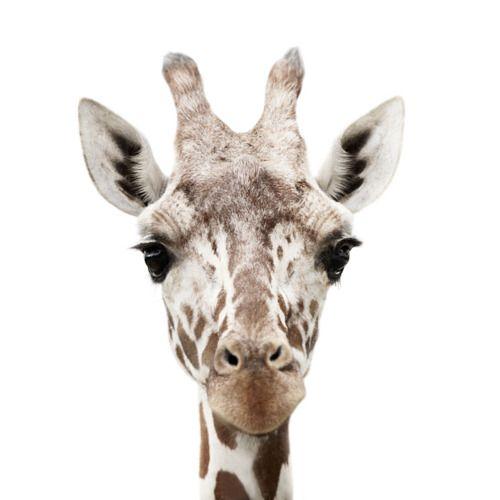 Love Love giraffes!